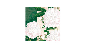 Dewed White Peonies